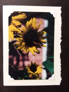 """Sunflower and Butterfly"" Photoprint 7"" x 5"" $5.00"