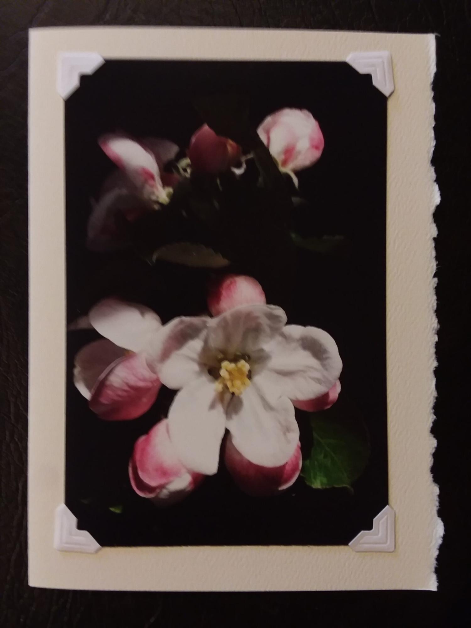 """Apple Blossom"" Photoprint 7"" x 5"" $5.00"